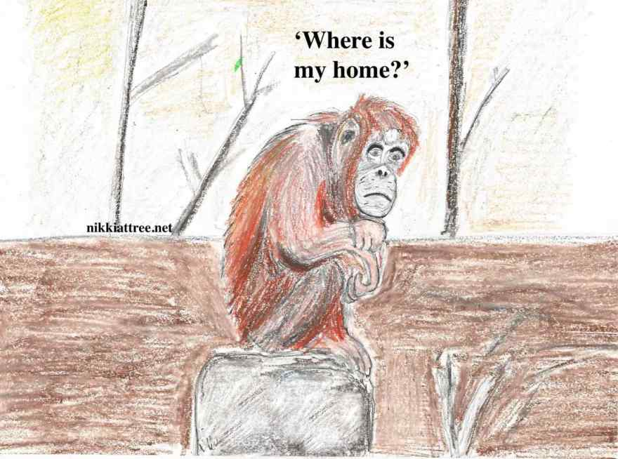where is my home? (2)